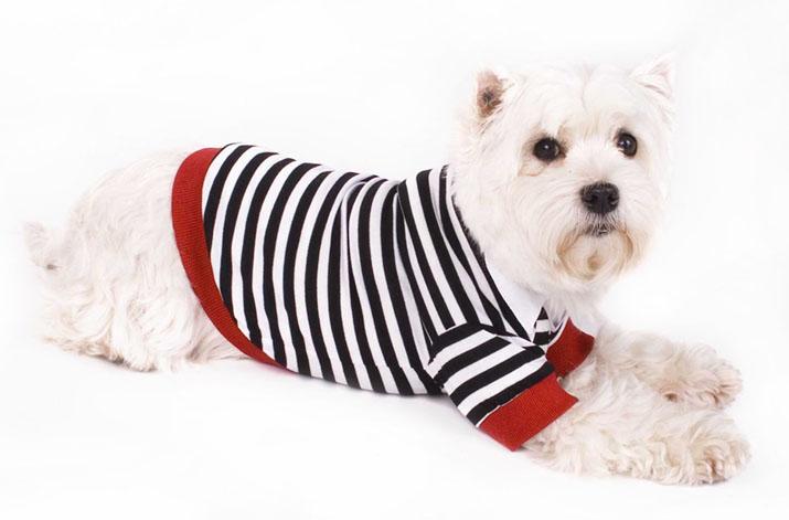 hundepullover hundepulli sweatshirt pulli uniform. Black Bedroom Furniture Sets. Home Design Ideas