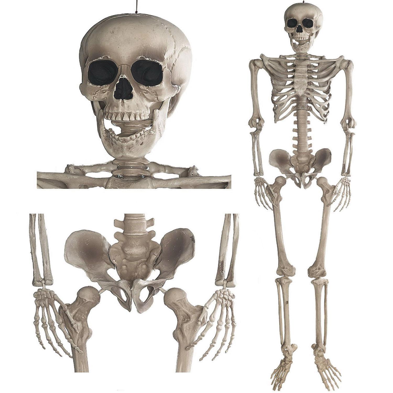 Grusel Pur: Halloween Skelett 160cm beweglich Anatomie Figur für ...
