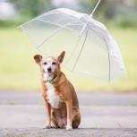 Hunde Regenschirm - transparenter Hundeschirm  - Geheimshop.de