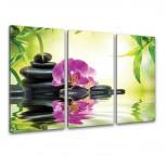 Kunstdruck -  3-teilige Leinwand - Orchidee & Bambus