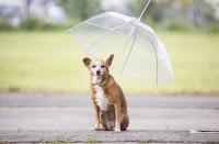 Hunde Regenschirm Hunderegenschirm für Hunde