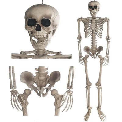 Skelett - Halloween Deko Anatomie Modellskelett 160cm