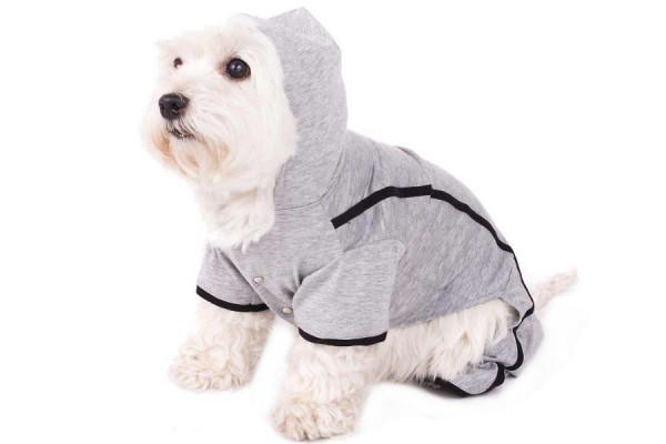 Jogginganzug für Hunde